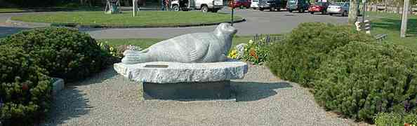 Andre, the Seal - Rockport Maine